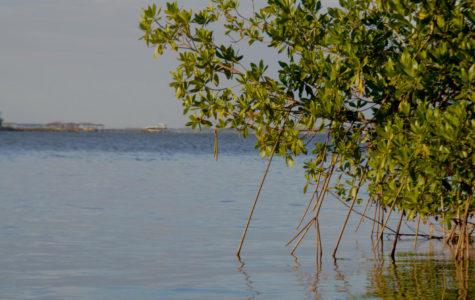 Lagoon on the Brink